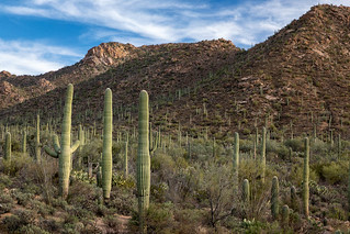 Saguaro Slope