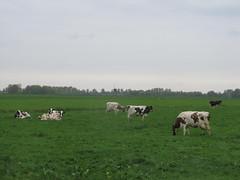 IMG_8402 (kassandrus) Tags: hiking wandelen netherlands nederland struinenenvorsen oude hollandse waterlinie