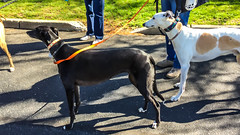 van saun earth day walk-17 (Visual Thinking (by Terry McKenna)) Tags: greyhound paramus newjersey unitedstates us van saun park