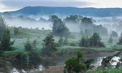 Kenilworth Homestead Qld Australia (Lesmacphotos) Tags: red breathtakinglandscapes mist morning river farmland cattle
