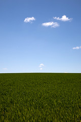 Horizon (Nature and human beings) Tags: contrast champs bluesky crop paysage contrastes fonddcran wallscreen