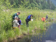 Pond Creature Crawl at Thacker Marsh, Hope (Hope Mountain Centre) Tags: hope pond wetland outdooreducation outdoorclass outdoorlearning hopemountaincentre hmcol
