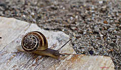 snail (hkvrlph) Tags: wood light urban white house slr art film fashion architecture digital canon turkey dark square outdoors photography eos 50mm photo petals glamour bokeh body mark 14 trkiye fine 5d format setup 365 usm pollen dslr 50 gallipoli ef ef50mm14usm  markii gelibolu 2013 5dm2