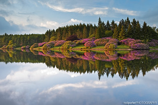 Lake Rhododendron