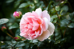 "Dyffryn Gardens • <a style=""font-size:0.8em;"" href=""http://www.flickr.com/photos/32236014@N07/9097643818/"" target=""_blank"">View on Flickr</a>"