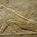 Lion Hunts of Ashurbanipal, dying Lioness (close)