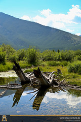 IMG_1503.jpg (sebastianaverdunk) Tags: urlaub natur reise kanada nordamerika