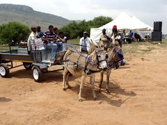 donkey cart builders-transport-cart-movie-2 (Tracka-Trekka) Tags: poverty horse water wagon southafrica northwest transport donkey cart carts touristattraction mule horseride donkeycart waterdelivery donkeyride watercart potablewater touristcart stilfontein helpsouthafrica povertyhelp