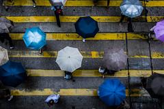 Hong Kong   |   Headcount (JB_1984) Tags: headcount people person umbrella rain drizzle crossing pedestriancrossing crosswalk mongkok yautsimmongdistrict kowloon kowloonpeninsula hongkong 香港 hongkongsar hk china nikon d7100 nikond7100 explore explored