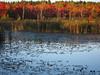 IMG_0961 (Dan Correia) Tags: amherst shadows swamp reflection 15fav topv111 topv333 topv555