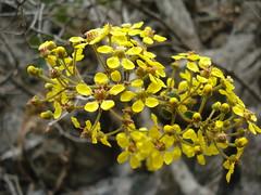 Flores Silvestres (jakza - Jaque Zattera) Tags: bonito matogrossodosul flores silvestres amarelo nanaturezainnature frenteafrente