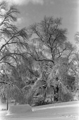 020669 05 (ndpa / s. lundeen, archivist) Tags: park trees winter blackandwhite bw snow storm building 1969 film monochrome boston 35mm ma blackwhite massachusetts nick snowstorm dome 1960s february common snowfall blizzard bostoncommon snowcovered statehouse winterstorm dewolf heavysnow massachusettsstatehouse bigsnow coveredinsnow recordsnowfall recordsnow nickdewolf photographbynickdewolf