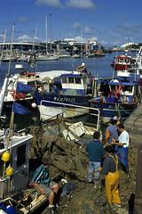 Boulogne-sur-Mer, port de pche (Ytierny) Tags: france vertical port bateau navigation manche bassin pche pasdecalais boulognesurmer chenal ctedopale chalutier fanion boulonnais ytierny