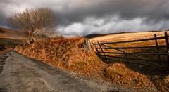 Autumn Fields (Heathcliffe2) Tags: autumn tree fall field gate meadow