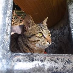 R0017569 (larccpw) Tags: cat neko    grd4