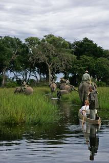 Botswana Okavango Delta Photo Safari 41