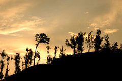 Tea gardens (shalakashah) Tags: trees sunset sky coffee gardens tea kerela vythri
