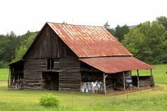 Very, Very faded advertising barn (SeeMidTN.com (aka Brent)) Tags: barn al alabama rockcity dekalbcounty sequoyahcaverns us11 bmok advertisingbarn bmok2 bmokotherbarn