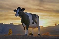 jardin de la vache du soleil