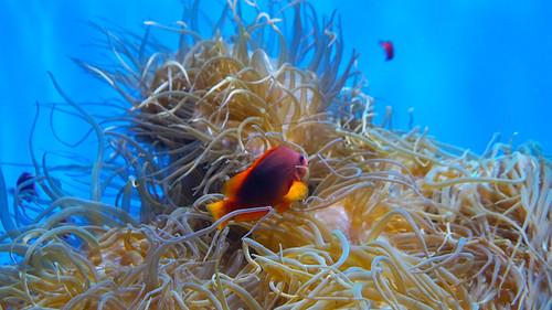 Thumbnail from Birch Aquarium at Scripps