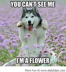 Best Funny Pictures,Funny Images,Funny Memes | Im a Beautiful Flower! (Daily Best Funny Pictures,Funny Images,Funny Memes) Tags: gag funnypics memes funnypictures funnyimages lolpictures gagphotos hilariouspictures lolpics funnymemes ragecomics lolimages bestfunnypictures funmemes