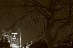 _Q9R1815 (Dream Deliver) Tags: trees blackandwhite night bell ntu fu nightfall