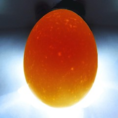 MacroMonday: Egg (Hayseed52) Tags: macromonday egg backlit color white orange