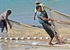 Ngapali Beach - Fishermen Haul in their Nets near Gyeiktaw Village (zorro1945) Tags: ngapalibeach myanmar burma asia asie gyeiktawvillage fishing fishermen nets fishingnets beach bayofbengal