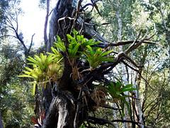 North Coast Regional Botanic Gardens last winter (set of 14) (Lesley A Butler) Tags: coffsharbour northcoastregionalbotanicgarden australia nsw