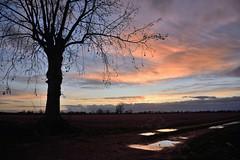 Quando viene sera (STE) Tags: albero tree pozzanghera pozzanghere puddle puddles tramonto sunset crepuscolo twilight cielo sky nuvole clouds silhouette