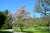 Rozendaal, tulpenboom in de tuin van kasteel Rosendael, Gelderland Nederland 2017 (wally nelemans) Tags: rozendaal tulpenboom tuin garden kasteel castle rosendael gelderland nederland holland thenetherlands 2017