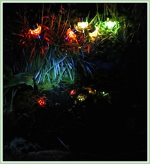 0304 b1 Solar light reflections (Andy - Busyyyyyyyyy) Tags: lll plants pond ppp reflections rrr solarlights sss water www picasaborder