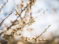 MARIAN SIMON PHOTOGRAPHY (MARIAN SIMON PHOTOGRAPHY) Tags: outdoor nature bäume natur em1markii olympus omd mzuiko75mmf18 olympusm75mmf18