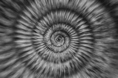 Nature Spiral (CoolMcFlash) Tags: pattern spiral macro closeup bnw bw blackandwhite blackwhite animal zoom canon eos 60d tamron b008 18270 repetition muster spirale makro nahaufnahme sw schwarzweis fotografie photography background
