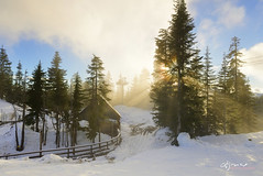 Sunset Mist (Lijuan Guo Photography ( Hollow Bamboo)) Tags: grouse mountain bear den mist winter spring sunset snow fog tree vancouver