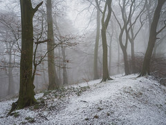Something From February (Damian_Ward) Tags: damianwardphotography ©damianward damianward oxfordshire trees chilterns chilternhills thechilterns fog mist snow