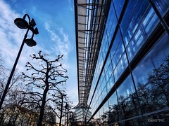A team of glass and urban nature (kanotpic) Tags: architektur baum lines cooldesign colourful tree colours closeup bäume architecture city patterns trees reflection spiegelung urbanpatterns reflections modernoffice