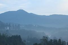 IMG_1526 (alvinpoh) Tags: cameron highlands tea plantation