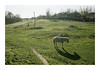 Countryside Stories (Florin Aioanei) Tags: countryside stories horse light green people nature romania florin aioanei
