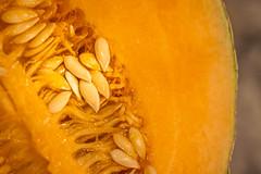 How Sweet It Is! - HMM (LFR5865) Tags: louisville kentucky cantaloupe seeds hmm home cucumismelo