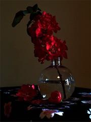 fleurs de Congnassier du Japon (JJ_REY) Tags: cognassier japon quincetree japan colors nikon d700 micronikkor 55mmf28ais colmar alsace france