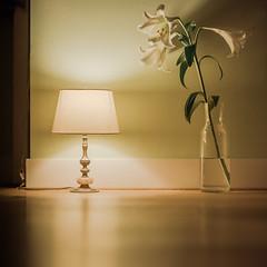 Pretentious lamp scene (rain3danimator) Tags: a7s sonya7s zeissmilvus50mmf14distagon zeiss milvus1450 zf2 stilllife novoflex