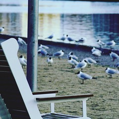 Bird Animals In The Wild Animal Wildlife Animal Themes Day Water No People Large Group Of Animals Nature Beach Outdoors Cold Temperature (petterssonnicklas) Tags: bird animalsinthewild animalwildlife animalthemes day water nopeople largegroupofanimals nature beach outdoors coldtemperature