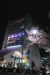 IMG_0526 (digitalbear) Tags: canon powershot g9x markii mark2 nakano dori sakura cherry blossom blooming fullbloom tokyo japan yozakura hanami