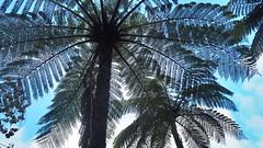 Taranaki (shonainnewzealand) Tags: newzealand taranaki ferntree tree