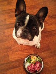 Beef, rice, cucumber, apple, spinach 5 (Anastasia Neto) Tags: dog dogs dogmodel dogphotography dogphotographer petmodel petphotography puppies puppy pet pets cutepuppies cutepuppy frenchie frenchbulldog frenchies funnydog frenchbulldogs funnydogs bulldog bulldogs