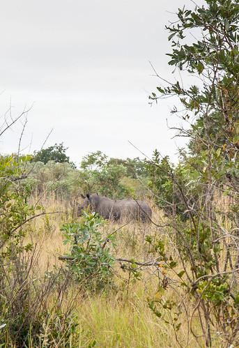 KrugerParkREIZ&HIGHRES-81