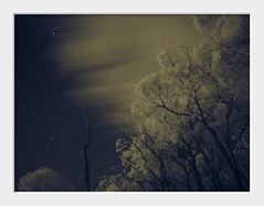 night on the mountain part 2 (Andrew C Wallace) Tags: ir infrared splittoned olympusomdem5 microfourthirds m43 night nightsky astronomy astrophotography stars sightron nanotracker trees mountdandenong victoria australia melbourne awphotos thephotontrap