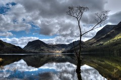 The Lone Tree (Glenn Shepherd) Tags: landscapes lakedistrict lakes cumbria colour skies sky buttermere water lone tree