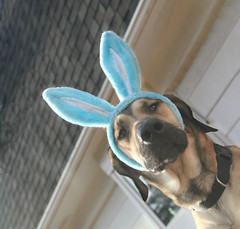 Easter Fritz (Cindy's Here) Tags: easterfritz easter ears bunnyears holidays canon 168365 dutchangle msh0417 msh04177 explore ansh scavenger13